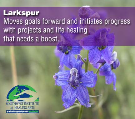 Larkspur-flower