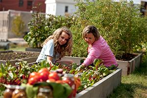 Urban farming Conscious living