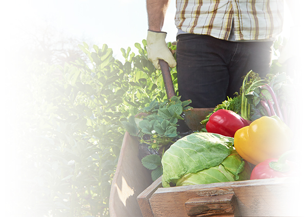 urban farming programs